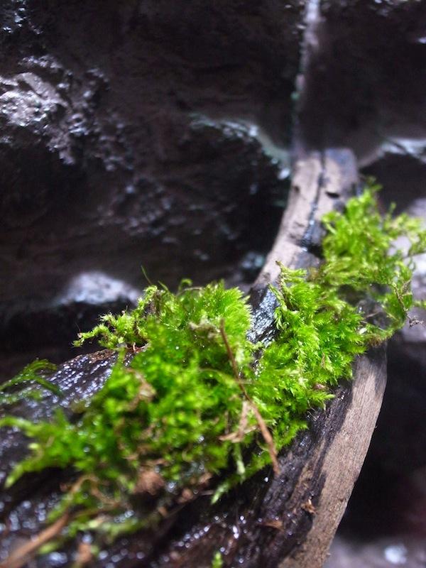 小型ビバリウム作成。滝の流れるビバリウムが完成!あとは苔や植物の育成を考える。