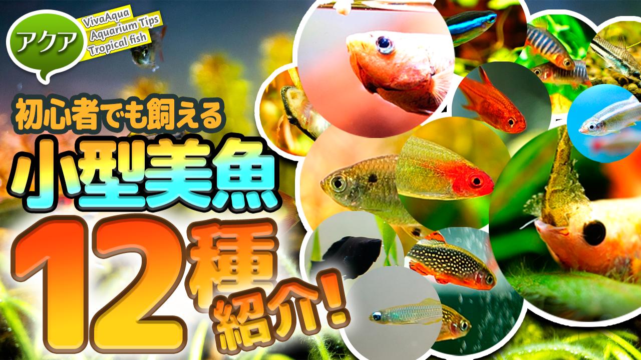 初心者でも飼える小型熱帯魚12種紹介