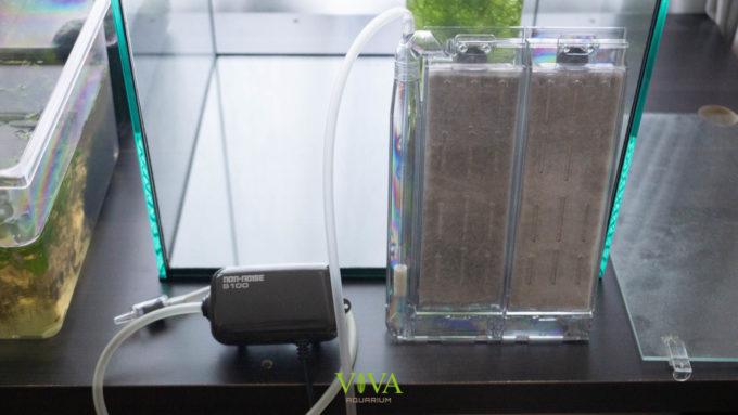 ミナミヌマエビ繁殖水槽