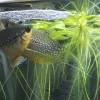 熱帯魚別繁殖記録