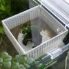 総額200円!100均で買える水槽内の自作隔離箱。高さ調節可能でガラス蓋もOK!
