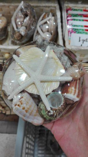 巻き貝とヒトデの詰め合わせ