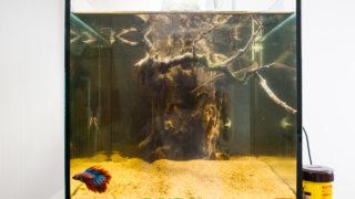 30cmキューブ水槽に巨大な流木をレイアウト!目指せ大樹の木漏れ日