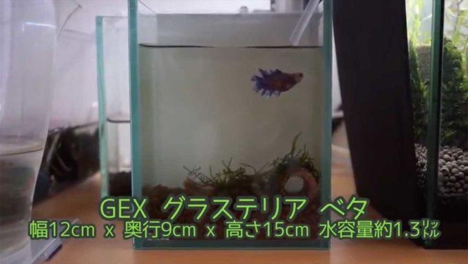 GEXグラステリアベタ